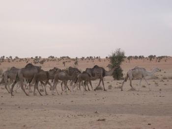 mauritanie route de l'espoir premier bivouac 2