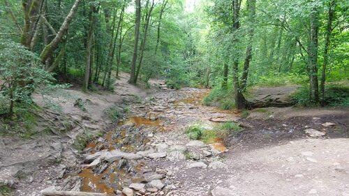 La forêt de Brocéliane