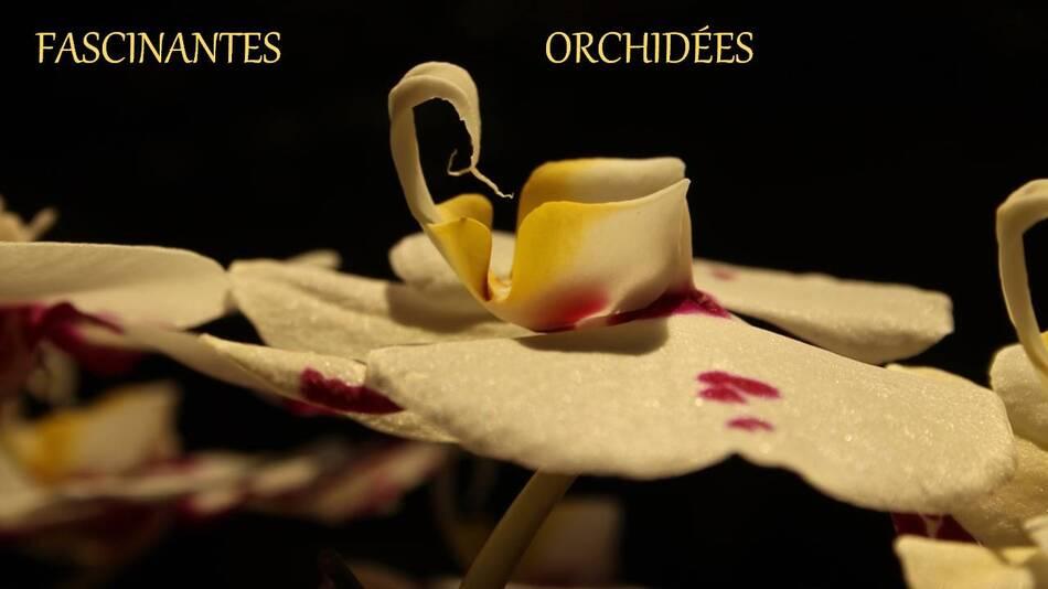 Fascinantes orchidées