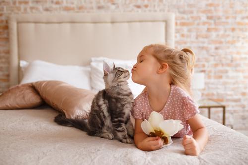 Les bienfaits qu'apporte la compagnie d'un chat