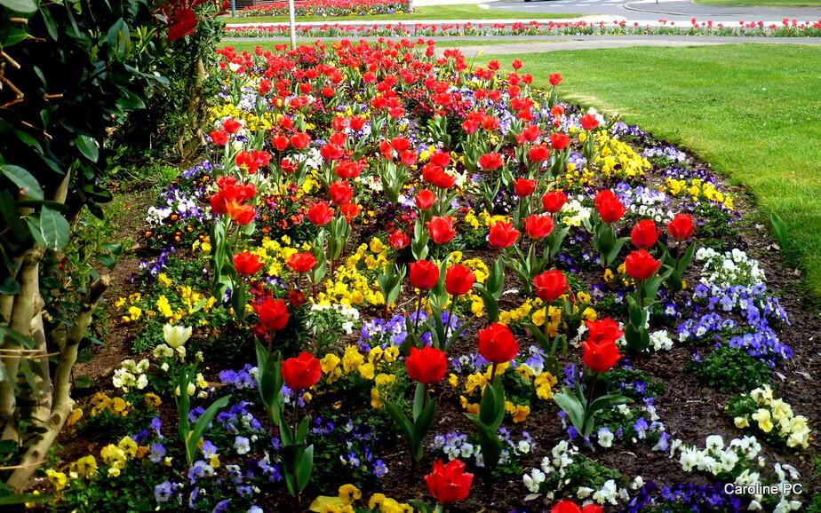 Le printemps à Mimizan