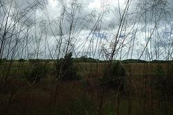 Balade de Port-Louis à Anse-Bertarnd