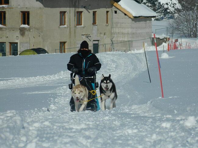 L'entrainement des chiens de traineau