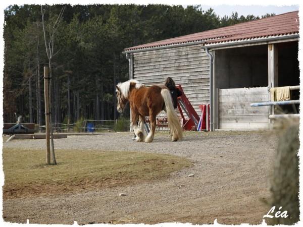 _MG_1444-cheval.jpg