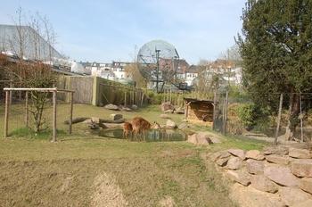 zoo cologne d50 2012 210