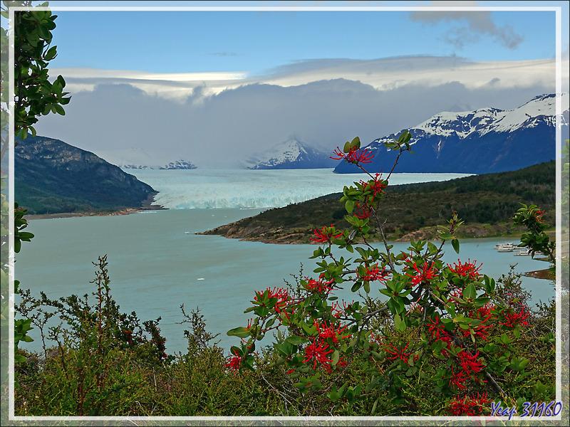Le Brazo Rico du Lago Argentino avec le glacier Perito Moreno - Patagonie - Argentine