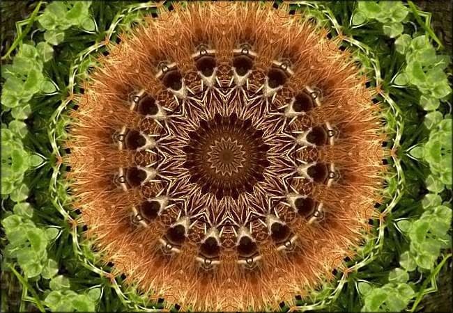 Kaléidoscope végétal