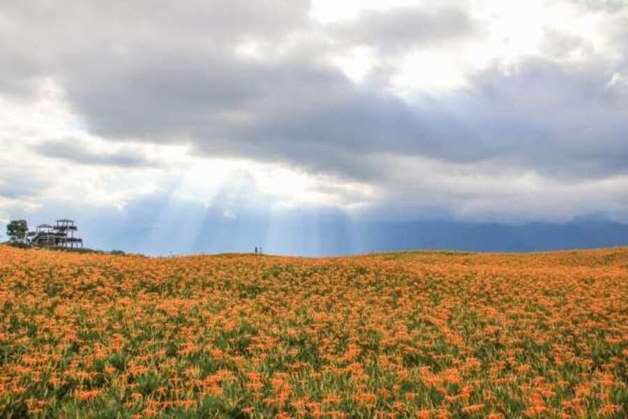 Fleurs de printemps - où les admirer ..