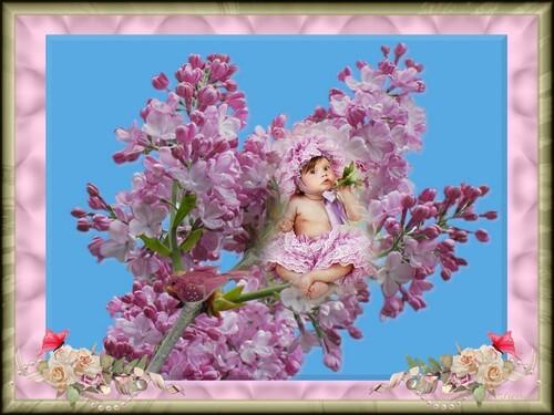 Création l'enfant lilas