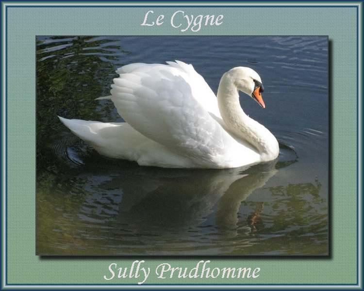 """"""" Le Cygne """" poème de Sully Prudhomme"""