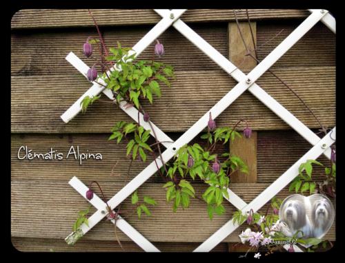 ♥ Belle semaine à vous d' Athos & Cheyenne ♥