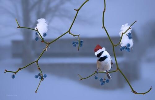 images oiseaux
