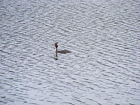 Lac de Pouzauges (30)