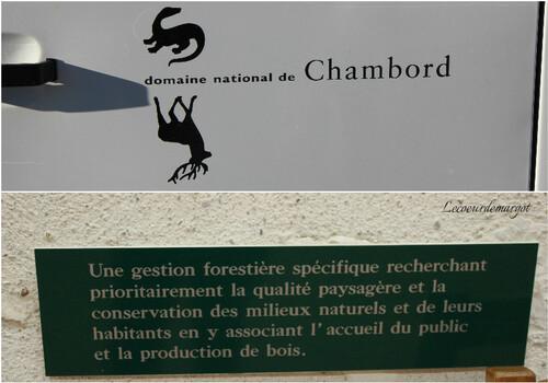 Brame du cerf en forêt de Chambord
