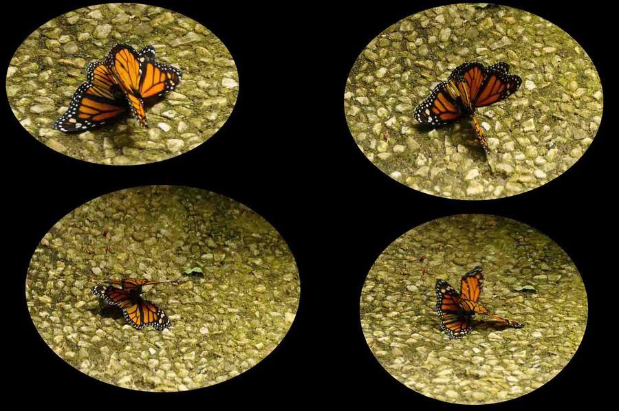 « L'Île aux  Papillons 2 »