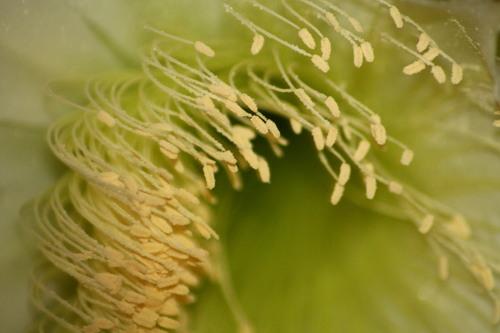 Dans la vie il y a des cactus et des fleurs