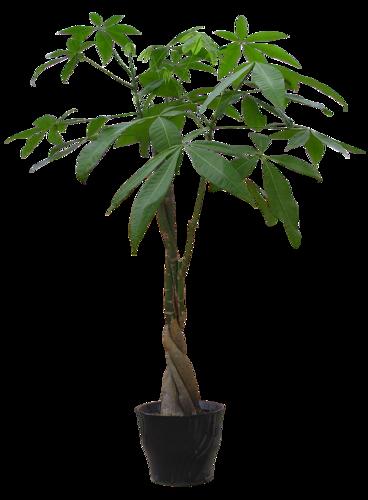 Verdure - Plantes Vertes Série 9