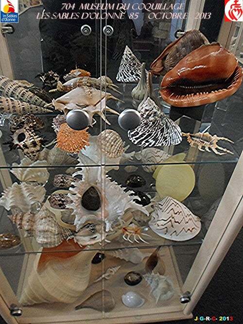 MUSEUM DU COQUILLAGE  7/16   vacances 10/ 2013  SABLES D'OLONNE    06/01/2014