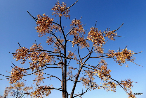 Un arbre en février!
