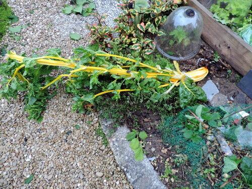 Avant et après l'orage de grêle... le jardin !