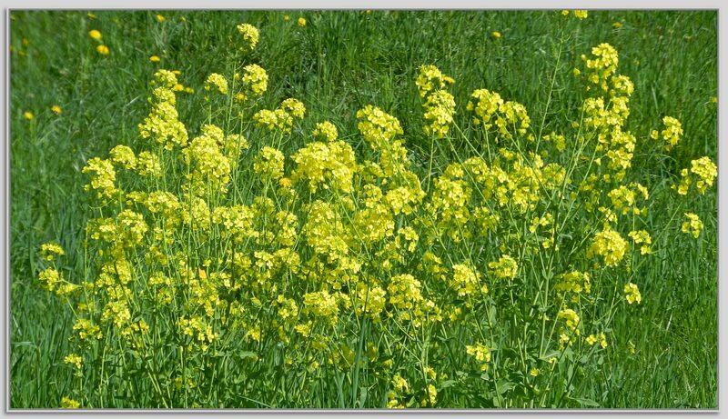 Les fleurs du printemps ,suite