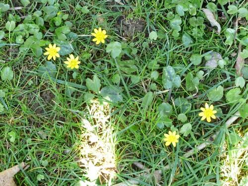 Mon ombre fleurie