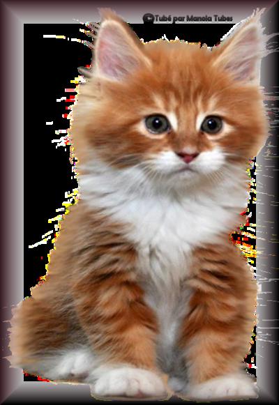 Tube chats - chatons 2976