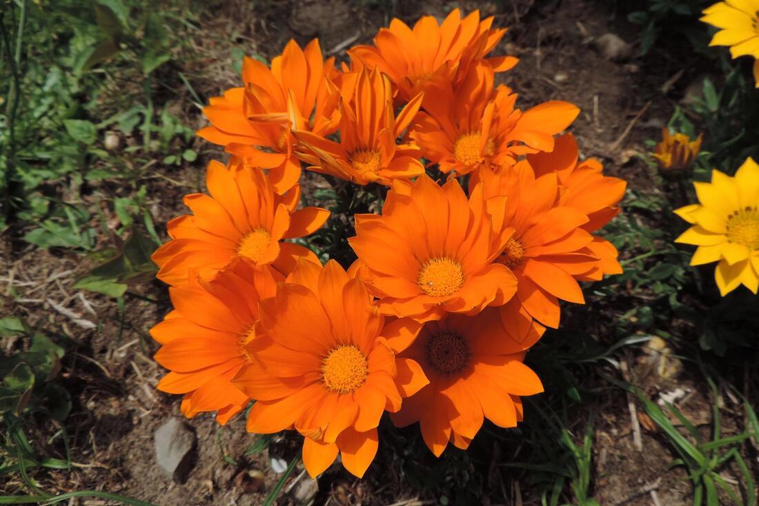 des fleurs pour vous ...