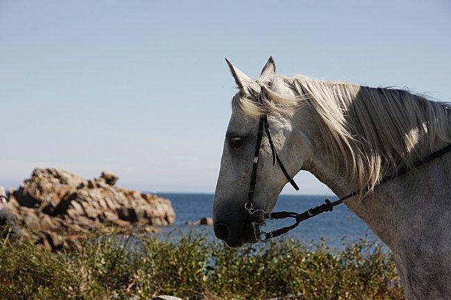 Porz-Bugale-82--23--cheval.jpg