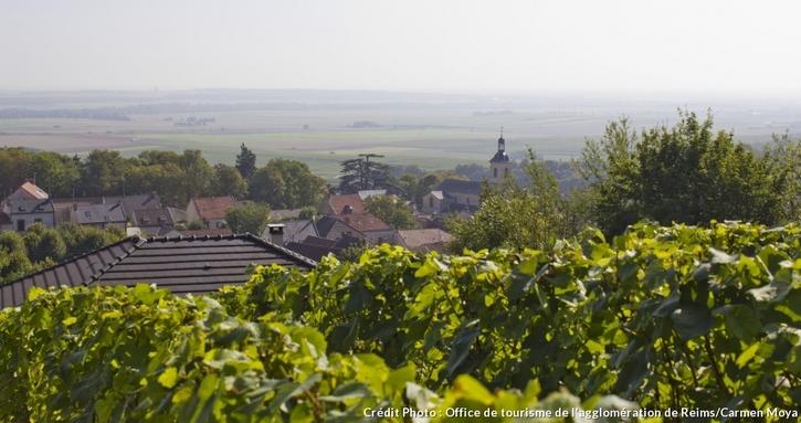 Le village de Verzy