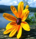 fleurs-russie