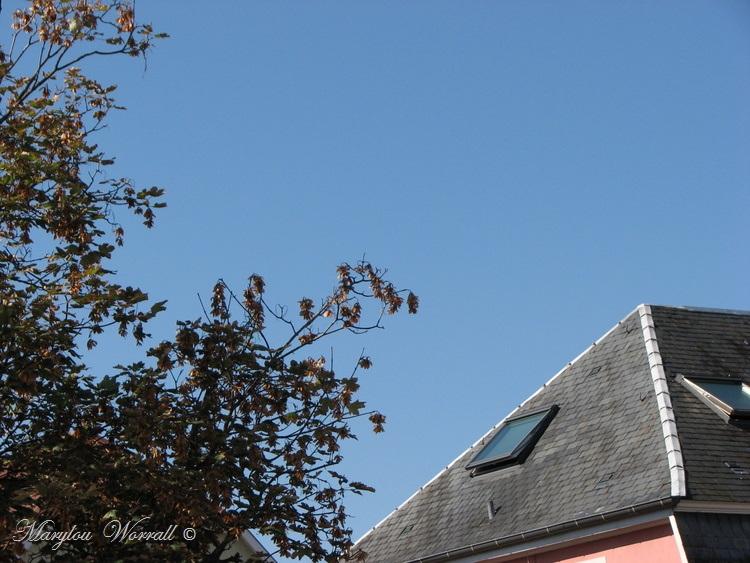 Ciel d'Alsace 381
