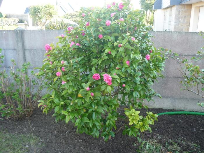 Le jardin tient ses promesses......