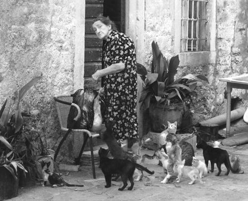 01 - Des chats et des femmes
