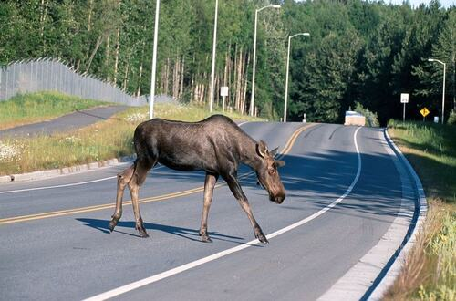 You'll Only Witness These Wacky Happenings in Finland.