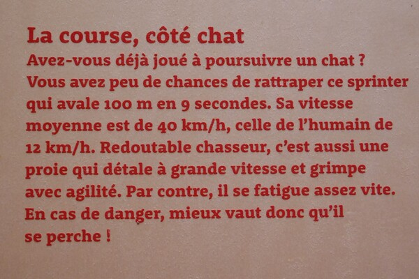 """Exposition """"(chiens et) chats"""" ;)"""