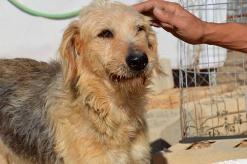 ARCA, adoption urgente, elle souffre de crises d'épilepsie au refuge / SOS