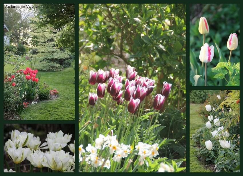 floraison bulbes 2019