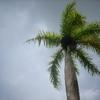 la solitude, les cocotiers....JPG