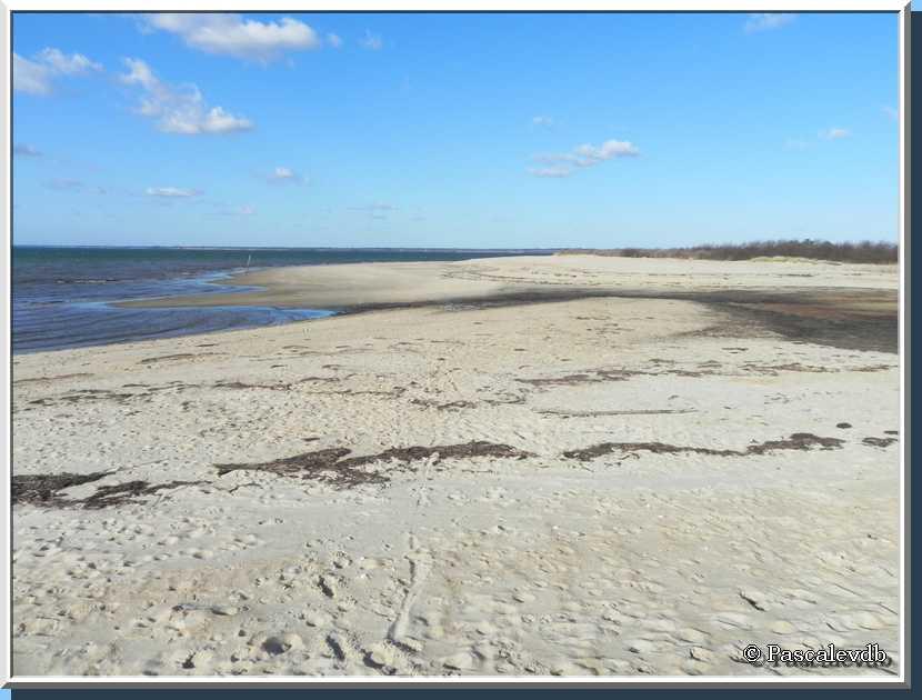Le sentier du littoral au Teich