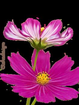 Virágok.6.