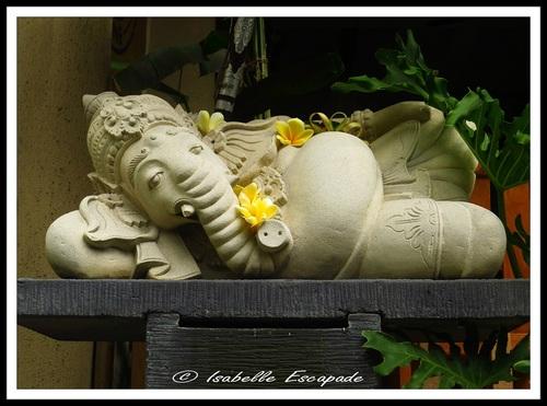 15 Août 2014 - Aujourd'hui... Ganesh s'est reposé !