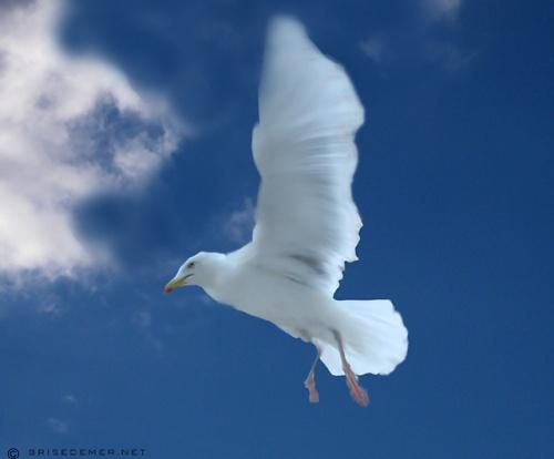 L'oiseau Blanc - André Clavier - Vidéo Elantra