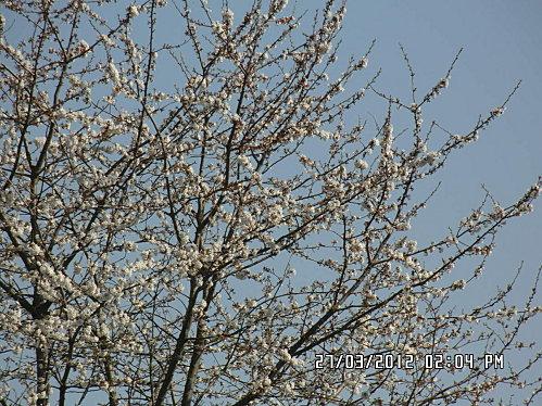 arbre-en-face-008.JPG