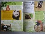 """Neuvième exposé """"Les pandas géants"""""""