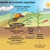 cycle matière organique