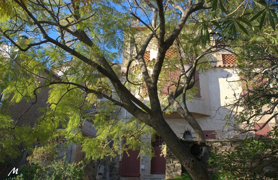 Un après-midi à Bormes les mimosas (partie 2)