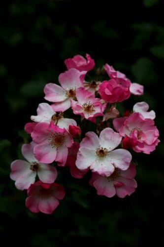 Un jour, une couleur : la vie en rose
