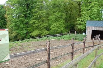 Parc animalier Bouillon 2013 enclos 059