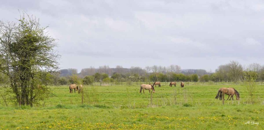 chevaux-henson-2167.jpg